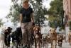 Инфраструктура для животных предусмотрена менее чем в 10% новостроек Москвы